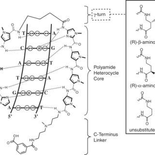 (PDF) Enhancing the cellular uptake of Py–Im polyamides