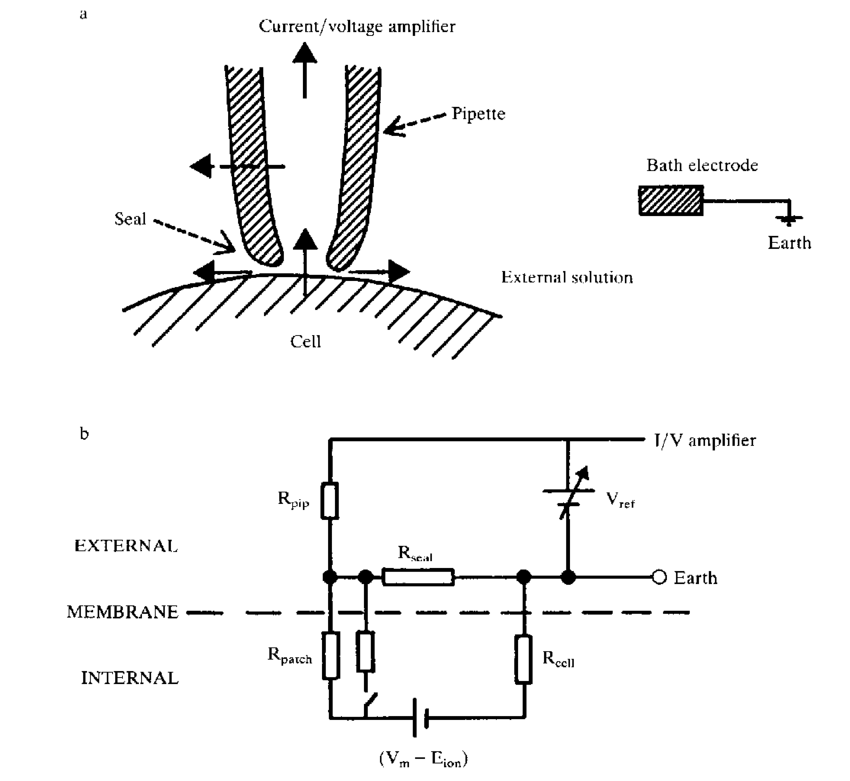 The relation of pipette to cell and the equivalent