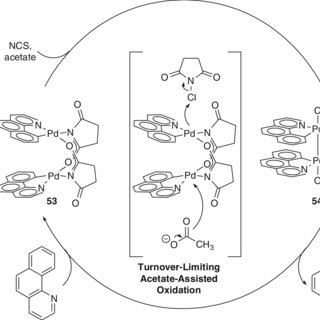 Proposed acetate-assisted bimetallic oxidation of 53 would