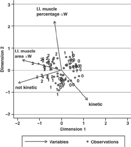 small resolution of multivariate analysis of the ileotibialis lateralis muscle percentage and area of fibers and kinetic