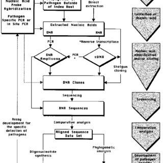(PDF) Fredricks, D. N. & Relman, D. A. Sequence-based
