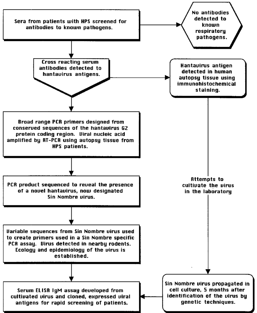 hight resolution of flow diagram describing the events leading to the identification of the microbe associated with hps and