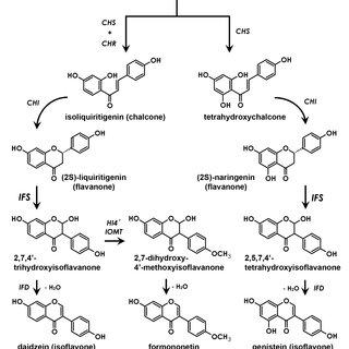 Schematic description of the isoflavonoid biosynthetic