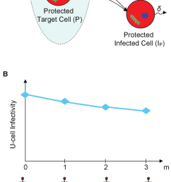 schematic illustration of infection dynamics under gene therapy and of the development of resistance to it [ 850 x 2074 Pixel ]