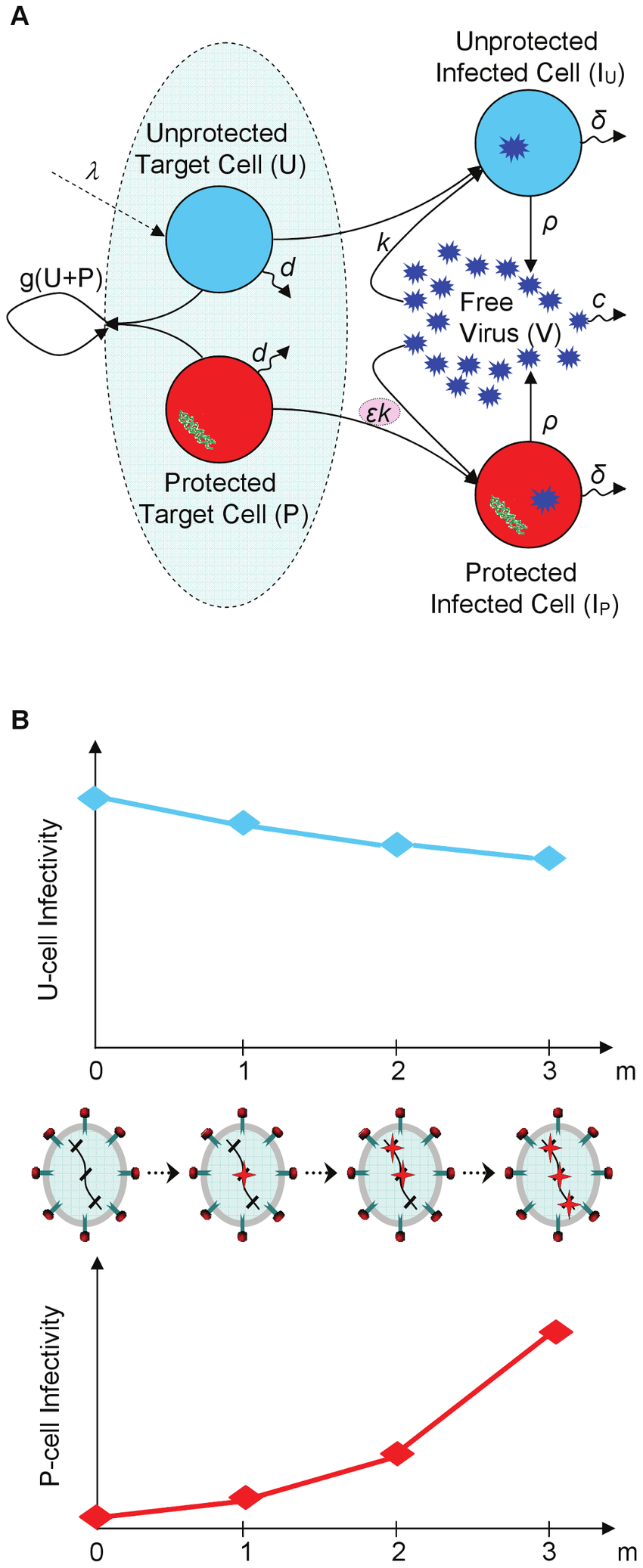 hight resolution of schematic illustration of infection dynamics under gene therapy and of the development of resistance to it