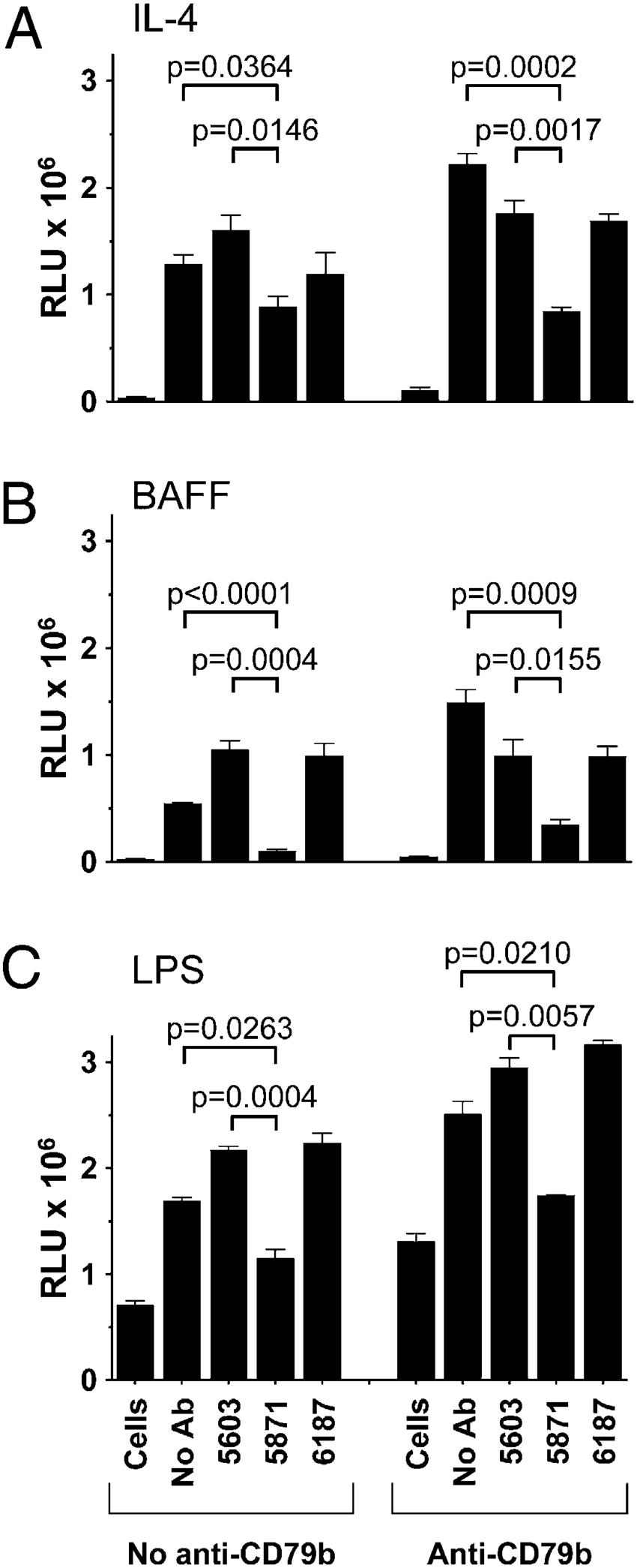 medium resolution of xmab5871 inhibits b cell proliferation signals in normal human b cells download scientific diagram