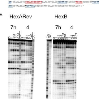 (PDF) GC-Targeted C8-Linked Pyrrolobenzodiazepine−Biaryl