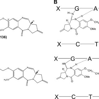a Structure of PBD dimers SG2000 (SJG-136) and SG2057. b