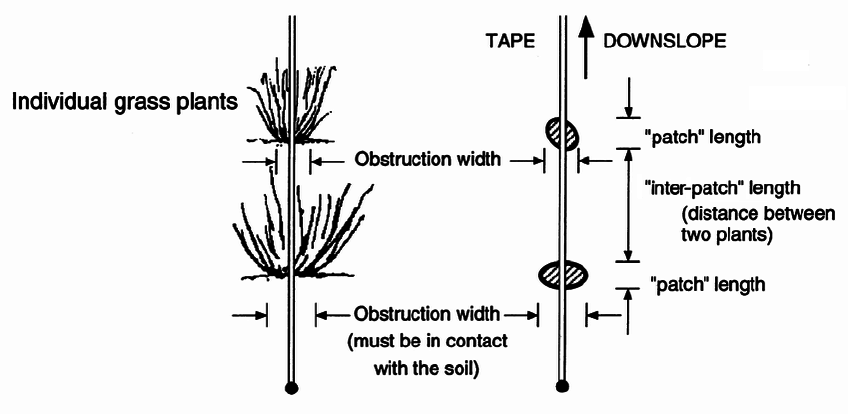 Illustrates the measurements of individual grasses when