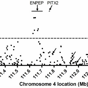 PITX2 expression was associated with AF history and rhythm