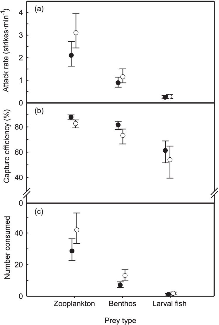 medium resolution of walleye sander vitreus and yellow perch perca flavescens foraging behavior