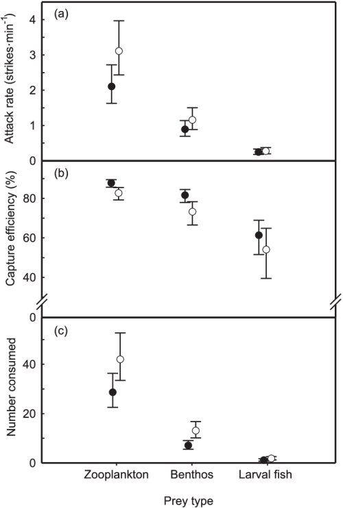 small resolution of walleye sander vitreus and yellow perch perca flavescens foraging behavior