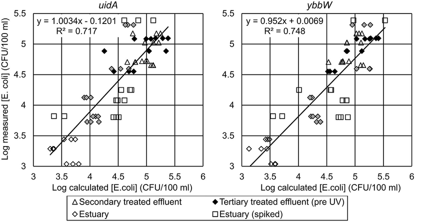Calculated E. coli concentrations from uidA and ybbW qPCR