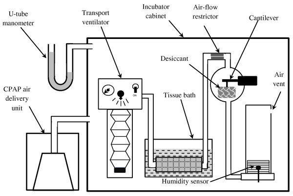Schematic representation of the apparatus set up within