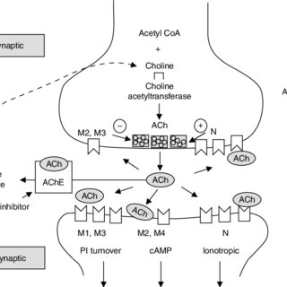 (PDF) Cholinesterase inhibitors used in the treatment of