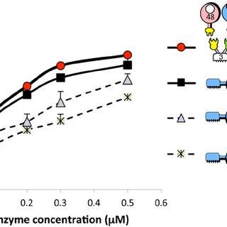 Kinetics studies on microcrystalline cellulose hydrolysis