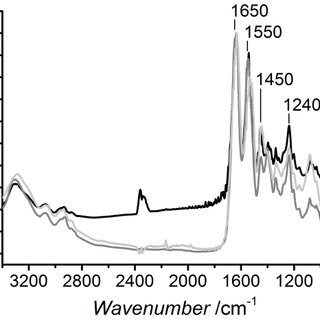 Formazan absorbance following MTS assay on L929 cells
