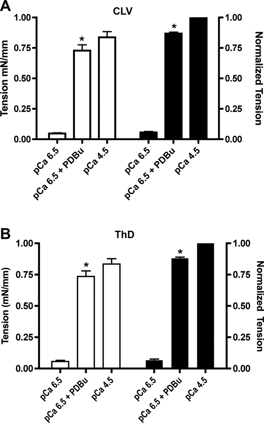 hight resolution of summary of the contractile response of toxin permeabilized cervical lymphatic vessel clv a and thoracic duct thd b lymphatic muscle to activation by