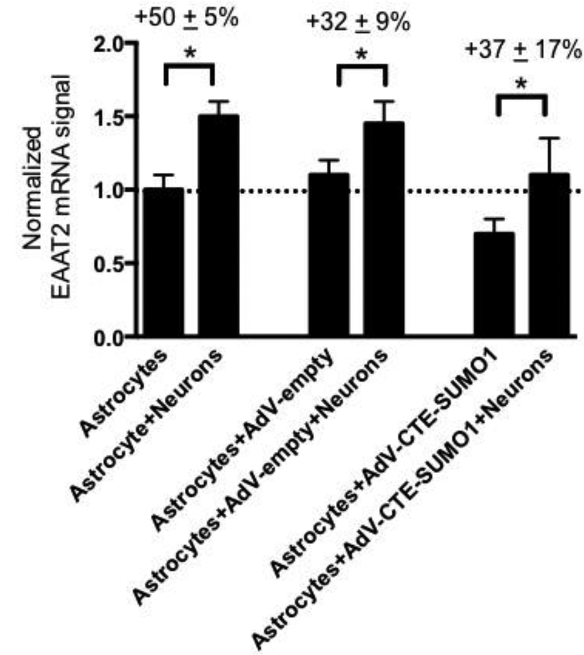 hight resolution of astrocytic expression of cte sumo1 does not block neuron stimulated eaat2 transcriptional activation