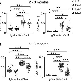 Effects of Lyn and ezrin deficiency on B cell subsets. (A