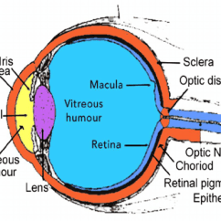 Structure Of Human Eye With Diagram Wye Delta Starter Connection Anatomical Ball Download Scientific
