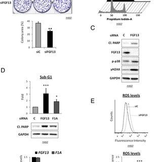 (PDF) Regulatory module involving FGF13, miR-504, and p53
