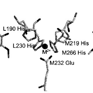 Protein surrounding structure of the metal-ionbinding site