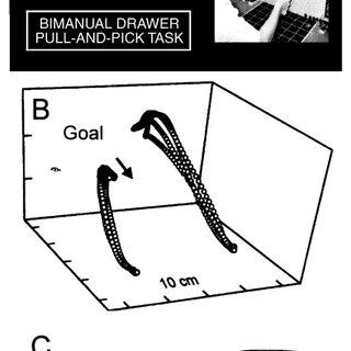 (PDF) Toward a Physiological Understanding of Human Dexterity