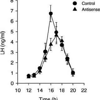 Arginine vasopressin (AVP) mRNA levels/cell in young and