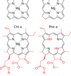 2 lewis structures of mgp mgc chl a and phe a  [ 850 x 1077 Pixel ]