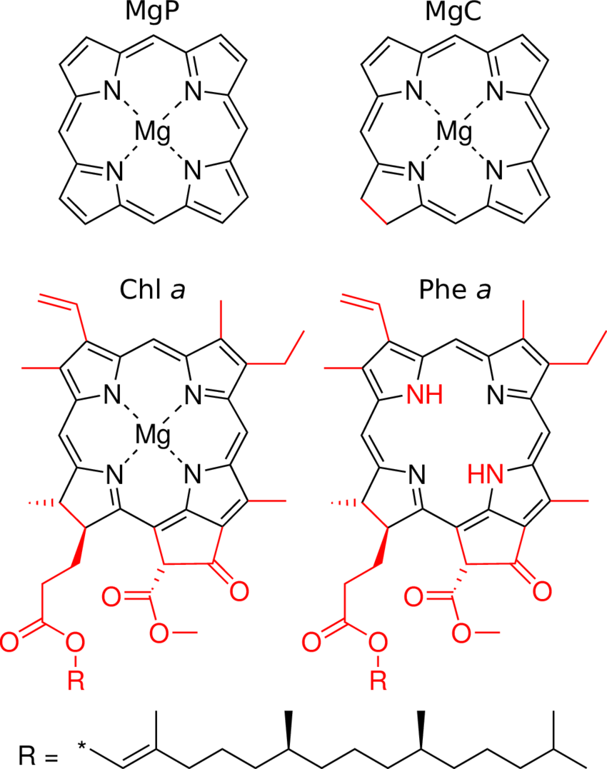 hight resolution of 2 lewis structures of mgp mgc chl a and phe a