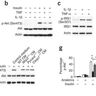 Inflammasome-generated IL-1β inhibits insulin signaling in