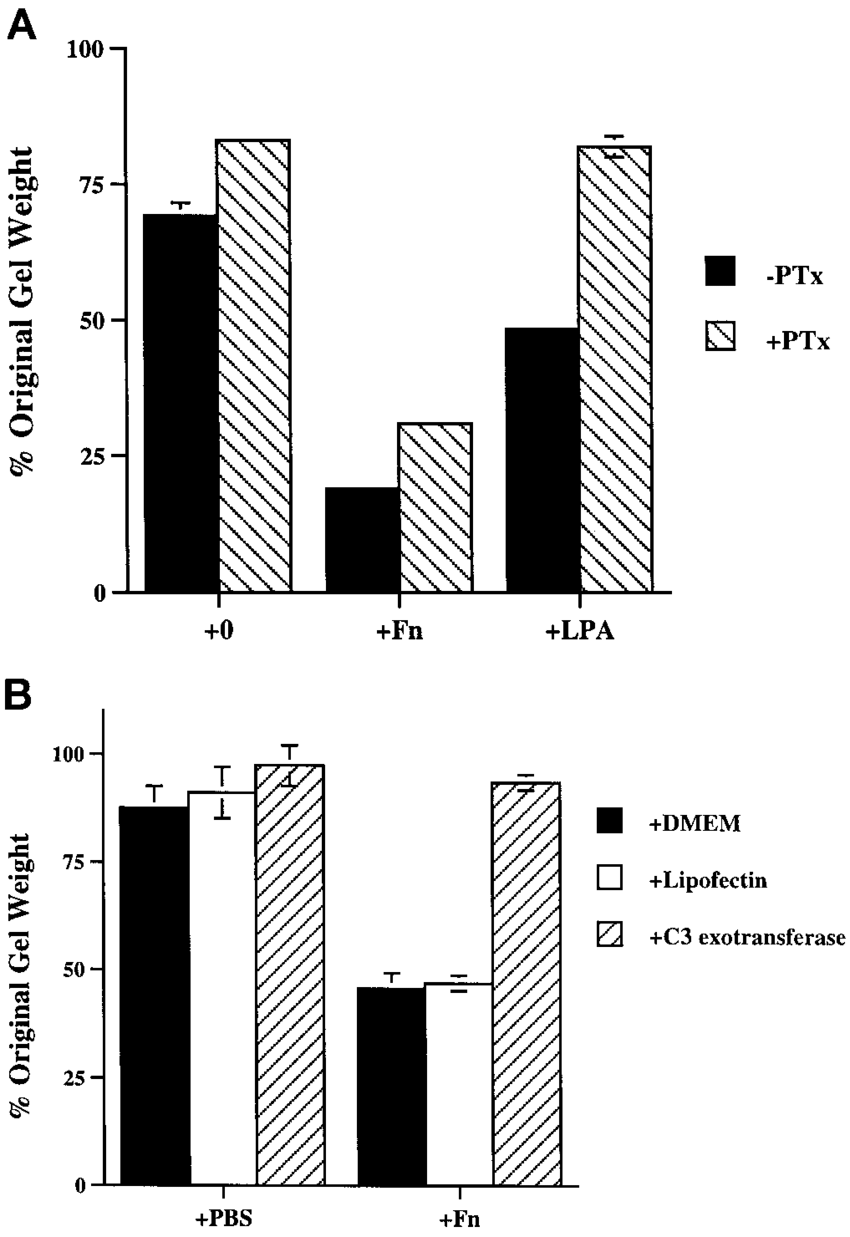 hight resolution of effect of pertussis toxin or c3 exotransferase on fibronectin induced contraction in a fibronectin null cell monolayers were incubated overnight with 25