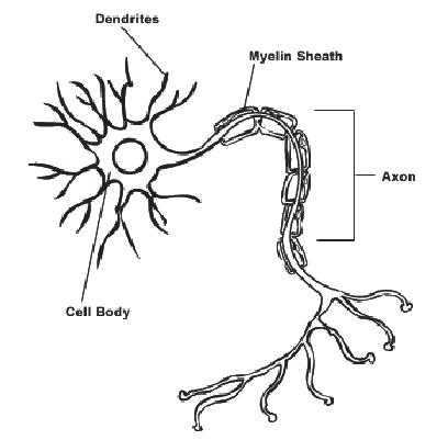 1975 Flh Wiring Diagram Pinout Diagrams Wiring Diagram