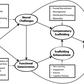 A conceptual model of the scaffolding theory of aging and