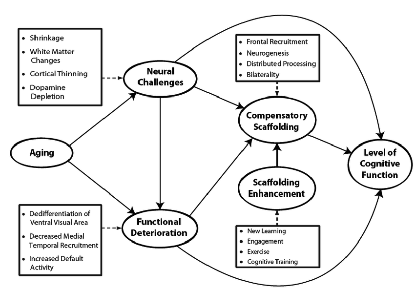Conceptual model of the Scaffolding Theory of Cognitive