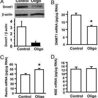 (PDF) DNA methyltransferase 1 regulates reelin mRNA