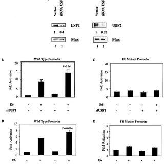 (PDF) Human Papillomavirus Type 16 E6 Activates TERT Gene