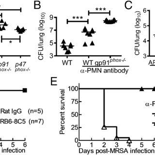 (PDF) Influenza Infection Suppresses NADPH Oxidase