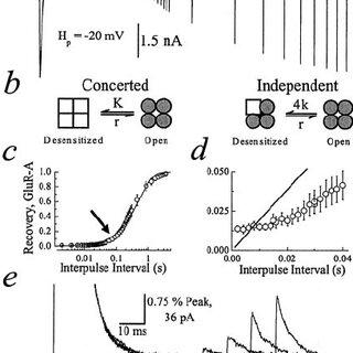 (PDF) Functional Stoichiometry of Glutamate Receptor
