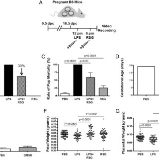 (PDF) An M1-like Macrophage Polarization in Decidual