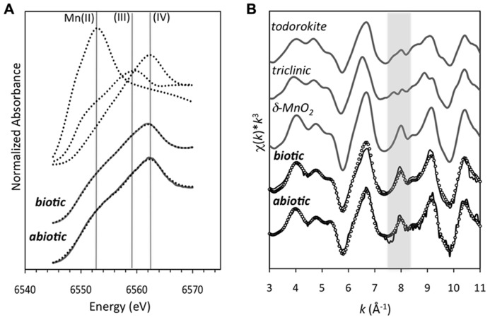 (A) Mn K-edge XANES spectra of the Mn oxides produced from