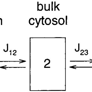 Reduction of voltage-gated K channel current due to wash