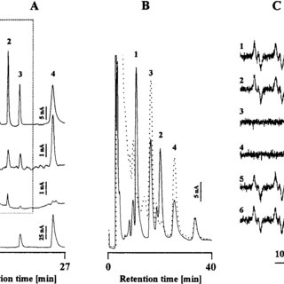 Voltage dependence of HPLC-EC signals of PBN/ C2H5 and PBN