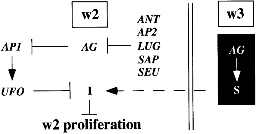 Model for mechanisms governing w2 proliferation. An