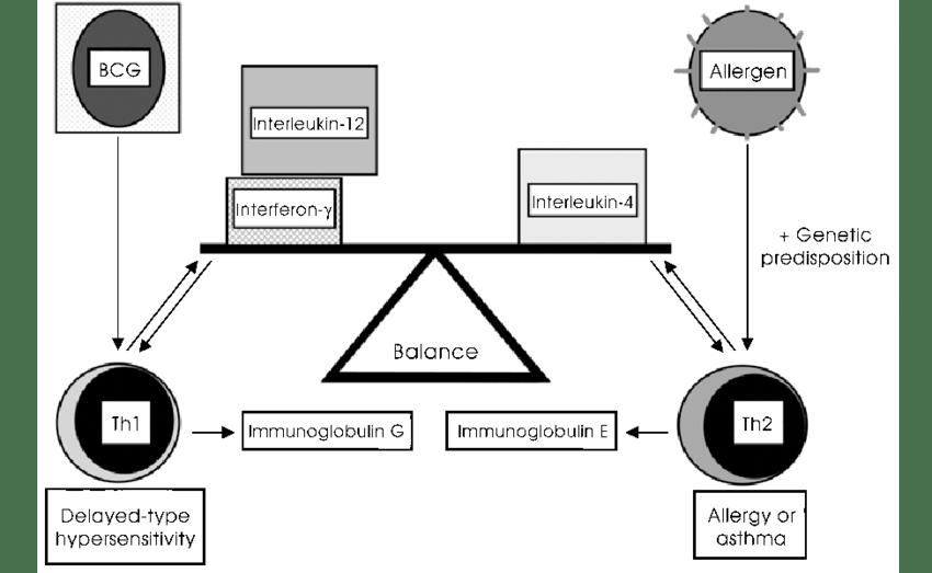 Obesity: Asthma Hypersensitivity Type