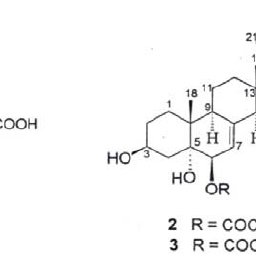 Anti-fungal activity of endophytic fungal extract against