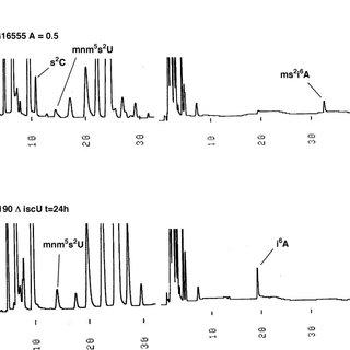High pressure liquid chromatography thionucleoside profile