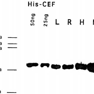 Detection of E2F-like DNA binding activities in carrot