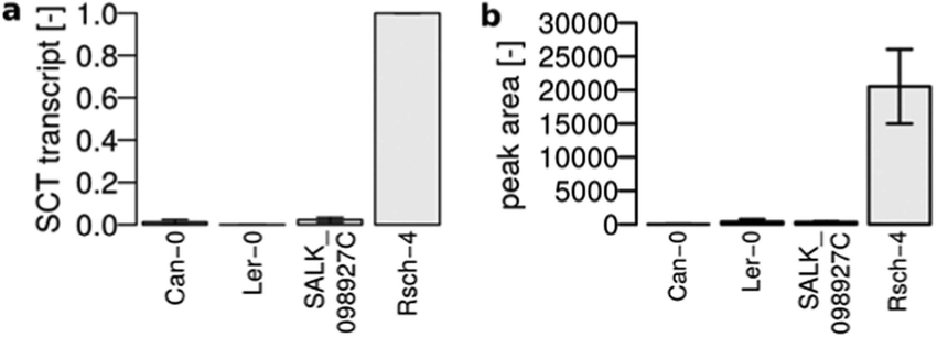 Natural and T-DNA insertion knockouts of SCT. (a) Relative